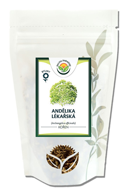 Salvia Paradise Andělika lékařská kořen 1 kg