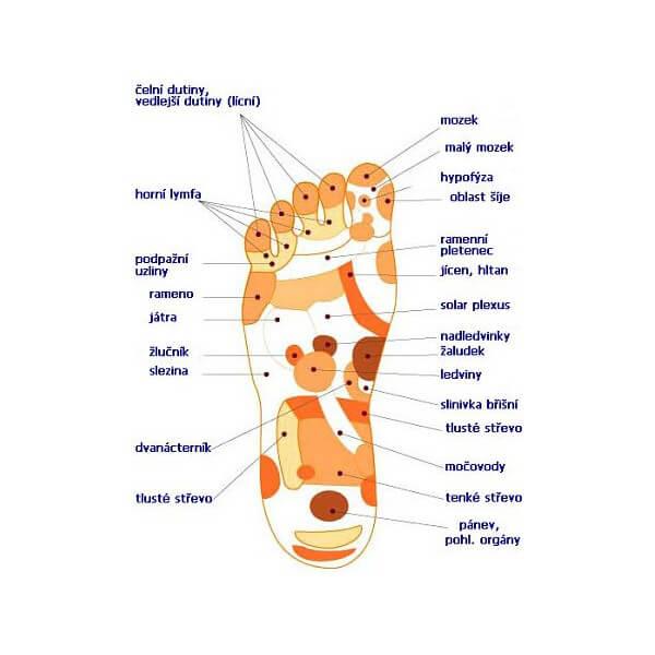 Reflexní zóny na chodidle