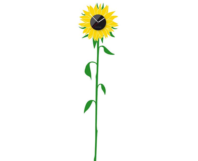 Clocker Sunflower
