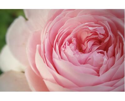 Tusfürdő 300 ml meleg tavaszi sóval és rózsákkal