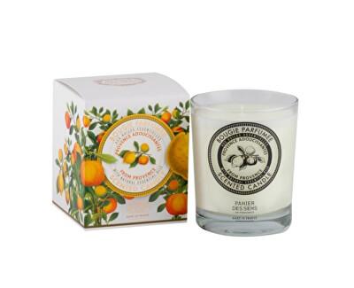 Panier des Sens Dekorativní vonná svíčka ve skle Provence 180 g