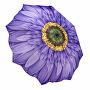 Dámský skládací plně automatický deštník Wisteria Daisy GFFWID