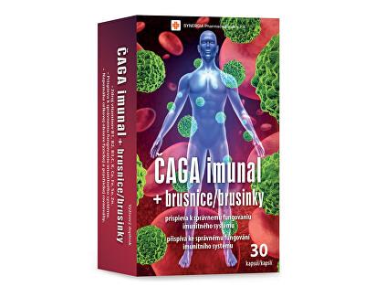 Synergia Čaga imunal + brusnice 30 kapsúl