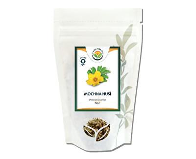 Salvia Paradise Mochna husí nať<br /><strong>Mochna husí nať</strong>